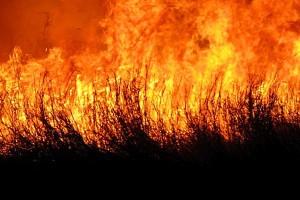 De alang-alangbrand